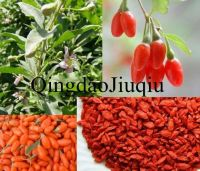 china dried goji berry