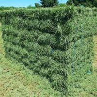 Cheap Alfafa Hay for Animal Feeding Stuff Alfalfa hay/alfalfa hay/high vitamin rabbit hay food for wholesale