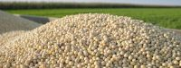 High Quality Premium Natural and Non- GMO Yellow Soybean Seeds / Soya Bean /Soy Beans (human and animal feed)