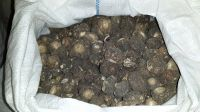 Dried Maca Roots