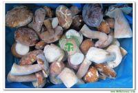 IQF Porcini/Porcino Whole Mushroom Grade A(6-8CM) 121104