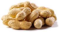 Almonds , Cashew, Macadamia , walnuts and more for exports.