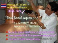 agarwood oil, essential oil, gaharu oil