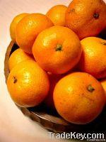 Kinnow (Mandarin)