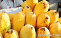 Fresh Mango (Sindhri)