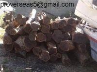 African Blackwood logs, African Ebony