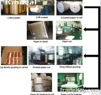 food grade single PE coated paper for cup