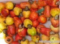Cashew Kernel & Nuts