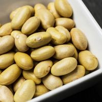 Canary Beans Known As Mayocoba Beans