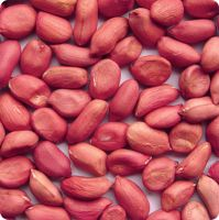 Red Skin Peanut Kernels South Africa