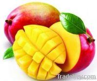 Mango Extract