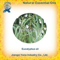 Chinese Eucalyptus oil 80% Wholesale Price Supplier
