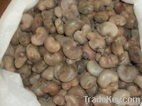 Cashew Nut Buyers | Cashew Nut Importer | Buy Cashew Nut | Cashew Nut Buyer | Low Price Cashew Nut | Cashewnut Suppliers | Cheap Cashew Nut | Wholesale Cashew Nut | Discounted Cashew Nut | Bulk Cashew Nut | Cashew Nut Suppliers