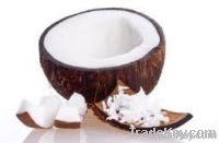 Coconut | Desiccated Coconut | Coco