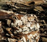 Wet Salted Donkey hides, Wet salted cow skin, Dry salted donkey hides