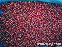 Frozen Lingonberry