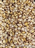 splilt broad beans