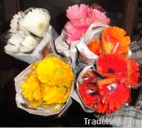 Gerbera Flower | Fresh Cut Flowers