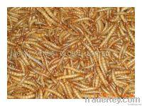 Natural Pet Food Mealworm