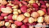 Red Kola Nut | Bitter Kola Nut