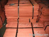 Copper Cathode seller