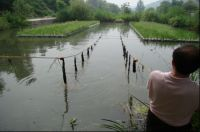 High-strength Biologic Carbon Fiber Grass