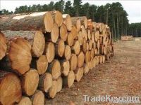 Timber and Sawn wood