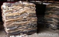 Quality Wet Salted Cow Hides