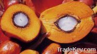 Refined and Crude palm oil