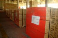 Pine LVL scaffold boards for scaffolding