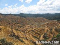 Plantation Technical Due Diligence