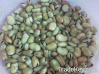 peanuts - broad beans(foul) - watermelon seeds - chickpeas - lupine -