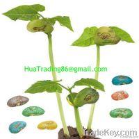 Cans plant  Message beans