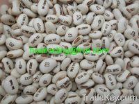 Message bean, Magic bean