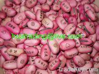 Red message bean, Magic bean