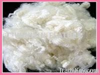 Hollow Polyester Fibers.