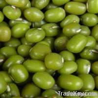 new green mung bean