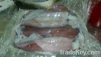 Whole Loligo Squid