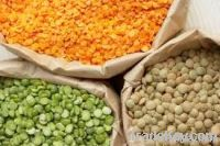 Wheat, Lentils, Chickpeas, Channa Dhal, Cotton Seeds, yellow corn, Fab