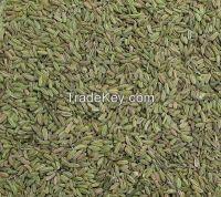 organic feneel seeds