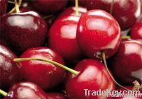 Fresh Cherry Supplier