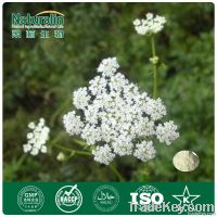 Cnidium Seed Powder Extract with 35% Osthole
