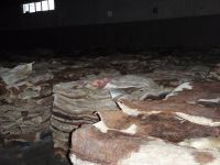 Wet And Dry Salted Cow Hide