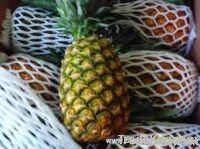 delicious sweet fresh pineapple with competitive price