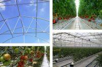 Multi-Tunnel Greenhouse Structure