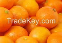 Fresh oranges , tangerine , citrus fruit , mandarin orange