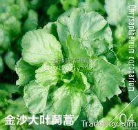 Broad-leaf Garland Chrysanthemum