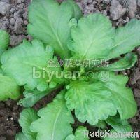 Broad-leaf Garland