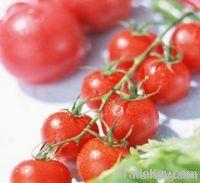 Tomato extract with Lycopene, lycopene capsules, lycopene powder, oil