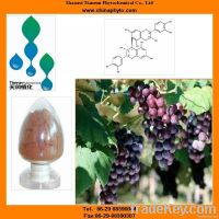 Grape extract with Proanthocyanidin